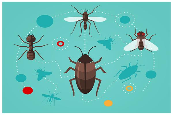 biologia-insetos